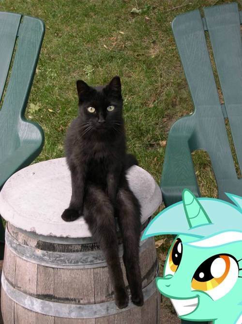 lyra heartstrings sitting Cats - 8356333312