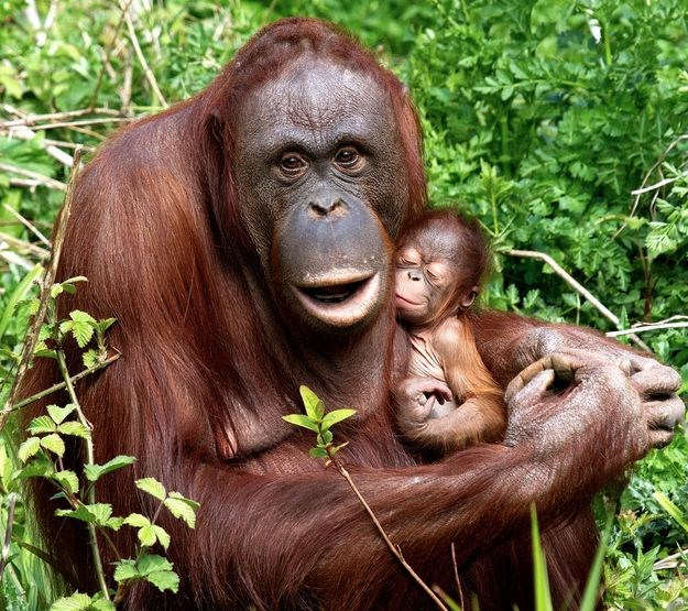 animal moms mothers day animals - 8356357