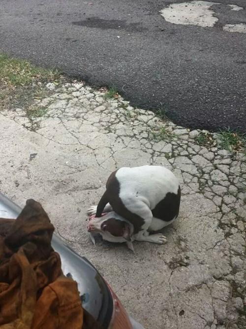 dogs gotcha tail - 8356646656