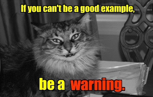 advice Cats evil warning