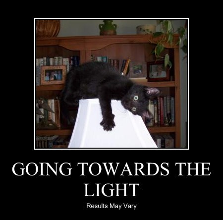 Cats black cat lamp light - 8356759040