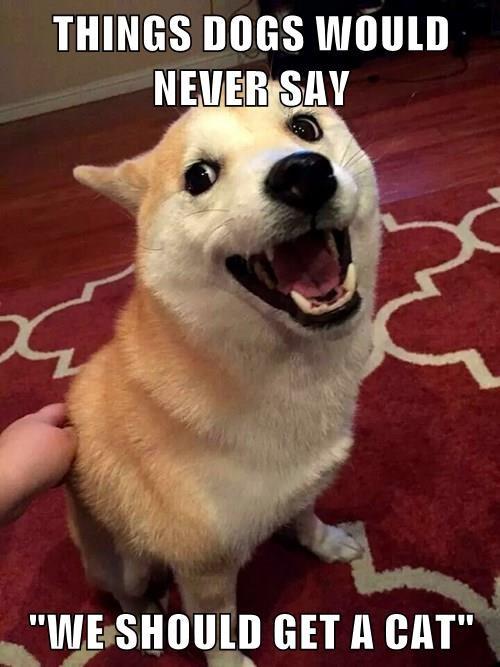 animals lol just kidding shiba inu - 8356826624