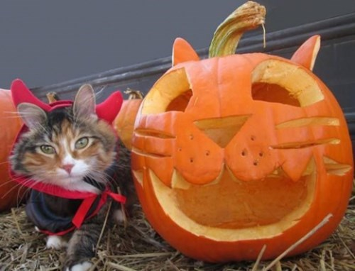 Cats,cute,kitten,halloween,pumpkins