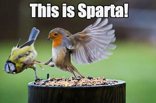 birds,Movie,leonidas,sparta