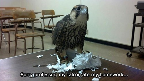 falcon,homework,shame,guilty