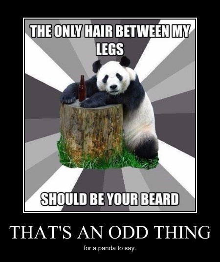 beard sexy times funny panda
