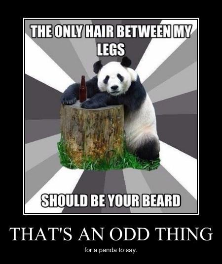 beard sexy times funny panda - 8357015552