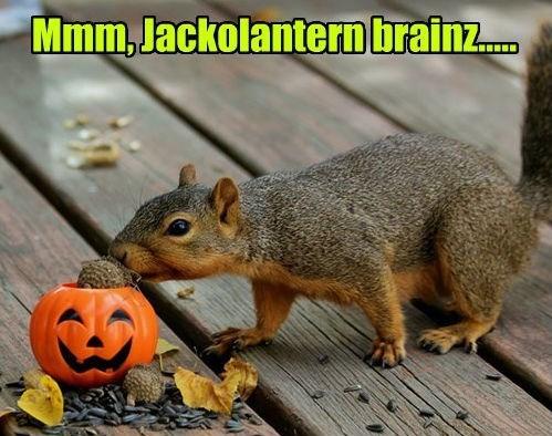 pumpkins zombie squirrel halloween - 8357746176
