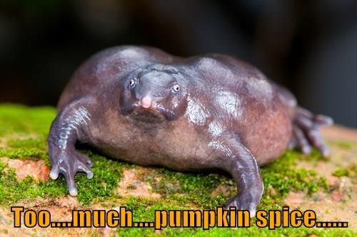 animals Starbucks pumpkin spice frog fall - 8357755136
