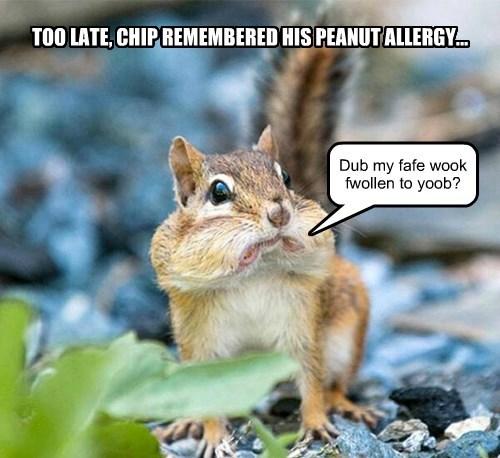 nut alllergy squirrel - 8357795072