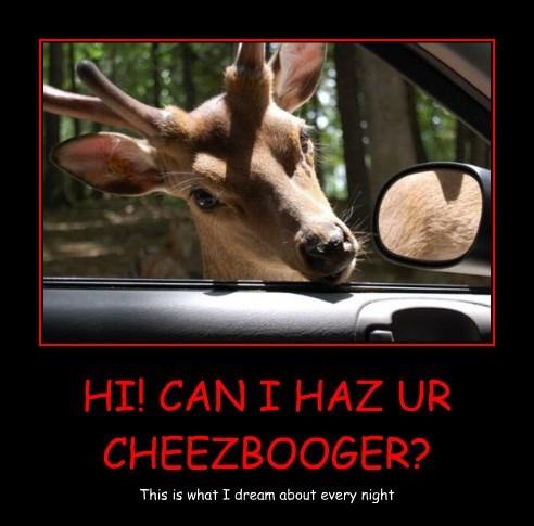 Cheezburger Image 8357939456