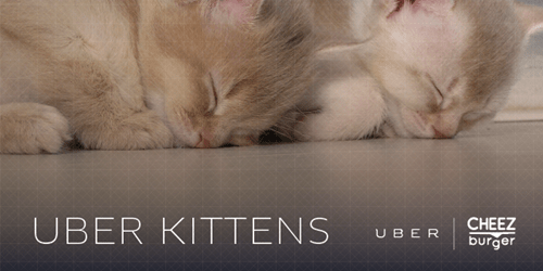 Uber kittens,national cat day 2014