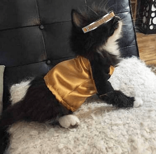 geek halloween kitten catscostume - 8358119168