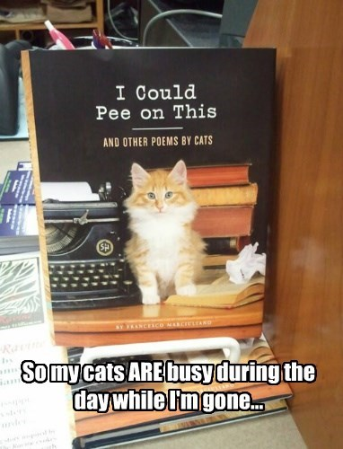 novel,pee,books,Cats