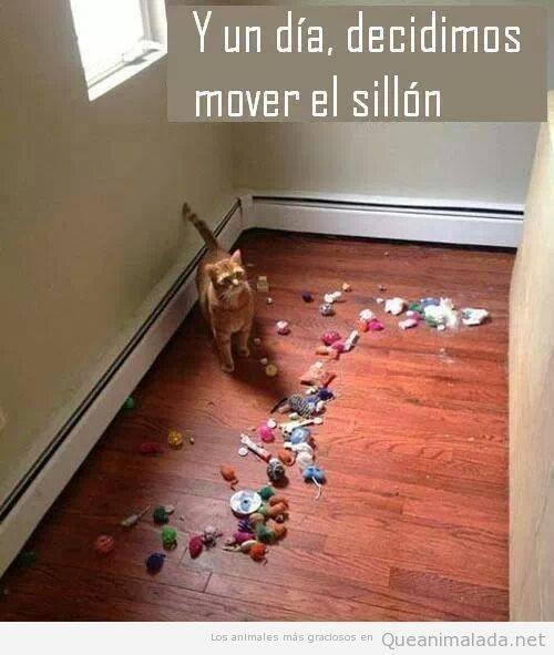 gatos bromas Memes animales - 8358179328