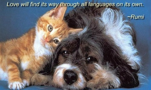 languages,cat,dogs,love,caption,all
