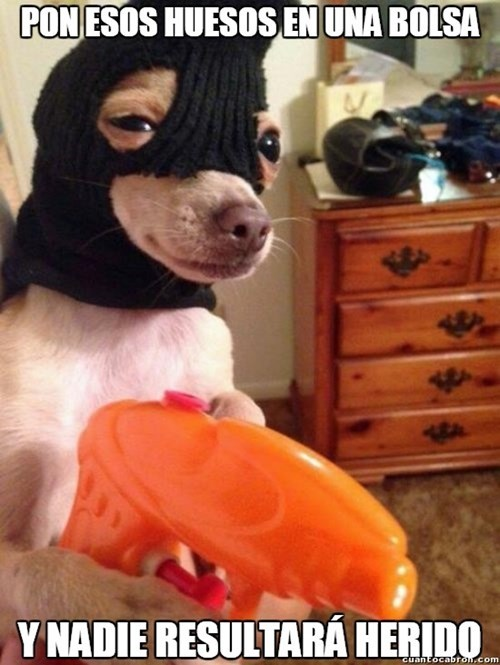 bromas perros Memes animales - 8358371072