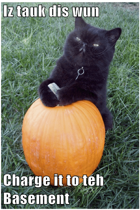animals basement cat pumpkins halloween Cats - 8358981888