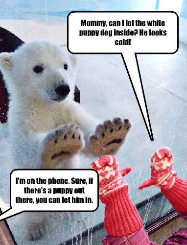 baby animals,kids,polar bear,cold