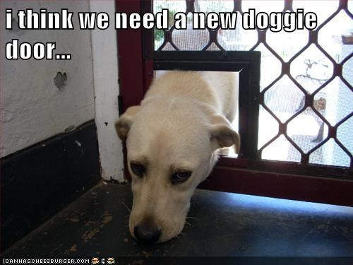 animals dogs captions funny - 8359479808