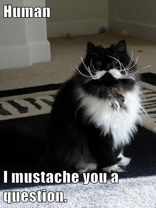 Image result for funny kitten with mustache memes