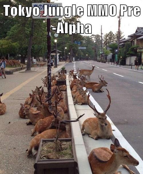 animals - 8359843072