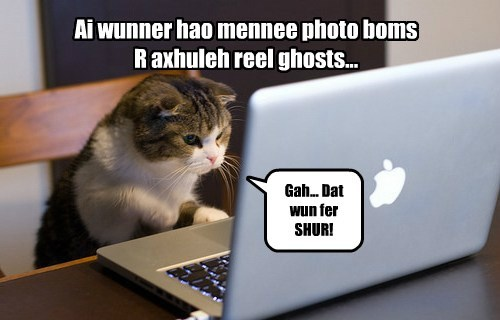 Cats ghost halloween the internets - 8359975168
