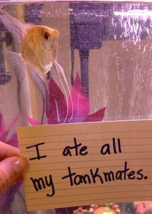 Fish Can be Jerks too