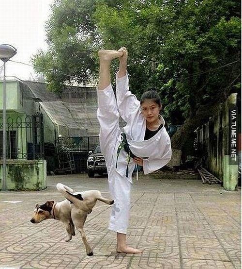 bromas perros animales fotos - 8360086784