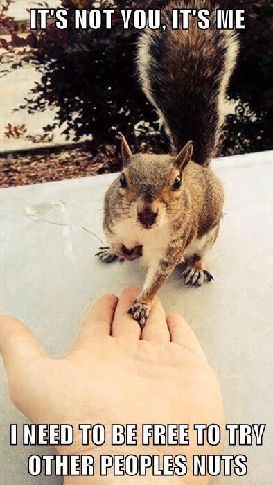 animals squirrel puns nuts breaking up - 8360150272