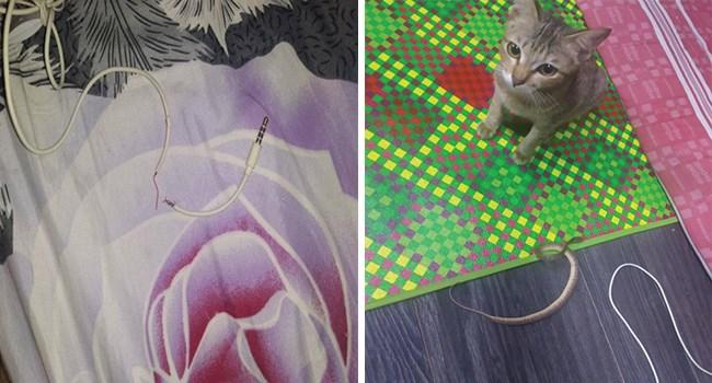 cute cat destroys owners headphones