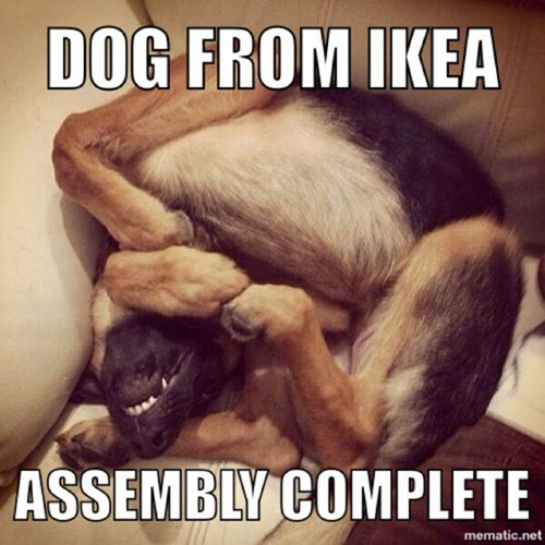 assembly,dogs,ikea,complete,captions
