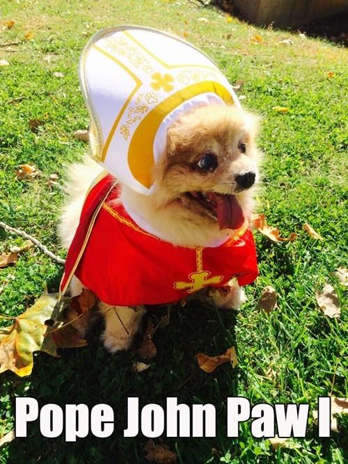 costume pomeranian dogs halloween pope - 8360462080