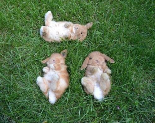 bunnies cute Bunday - 8360519680