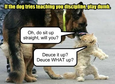 cat dogs play dumb discipline - 8360624896