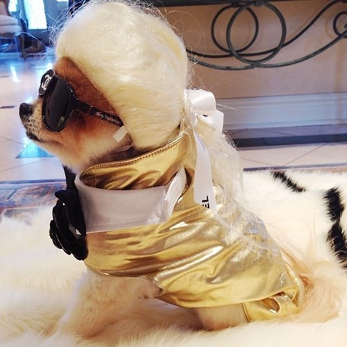 costume dogs fabulous - 8360754432