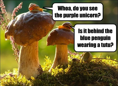 unicorn,snails,drugs,Mushrooms
