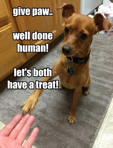give paw.. well done human! let's both have a treat!