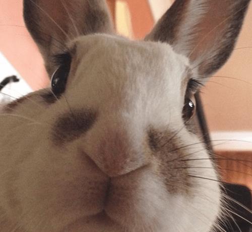 happy bunday,bunny