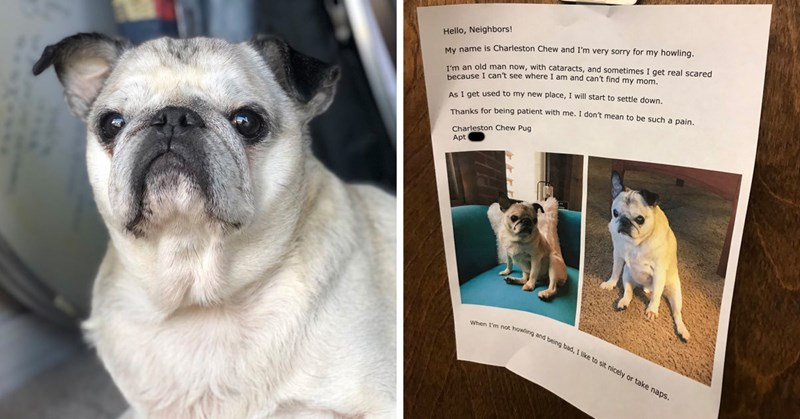 aww dogs pug senior tweets howling viral charleston - 8360965