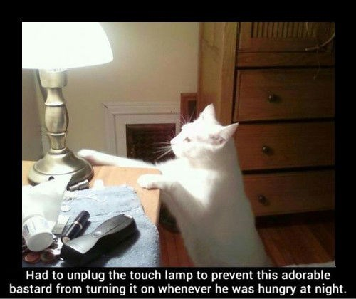 Cats,food,funny,touch lamp