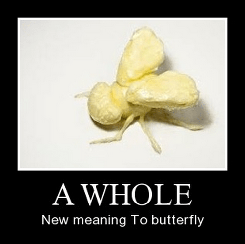 butter butterfly insect funny - 8360982272