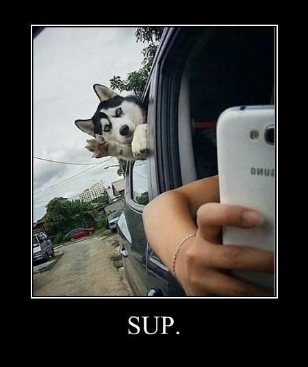 cute dogs funny selfie - 8360982784
