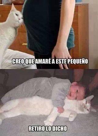 Memes animales gatos bromas - 8361207552