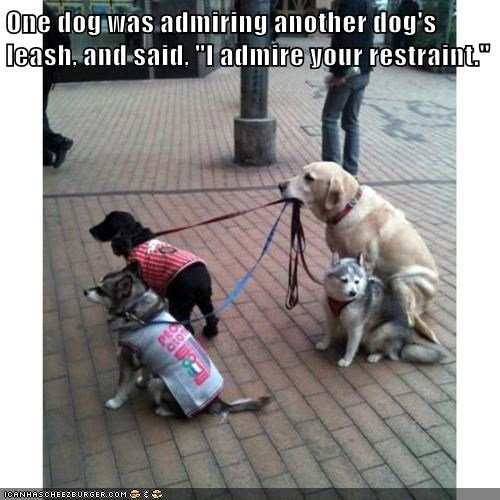 dogs,leash,admire,caption,restraint
