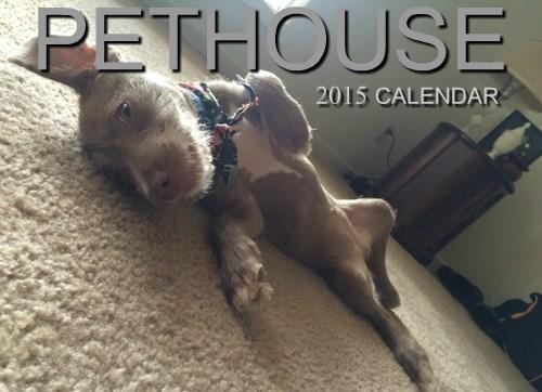 dogs calendar Awkward penthouse - 8361554688