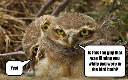 bath bird Owl voyeur - 8361578240