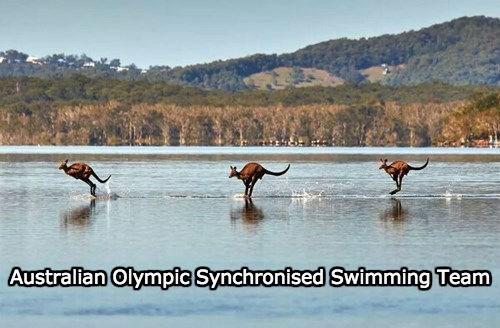 australia kagaroo olympics - 8361639168
