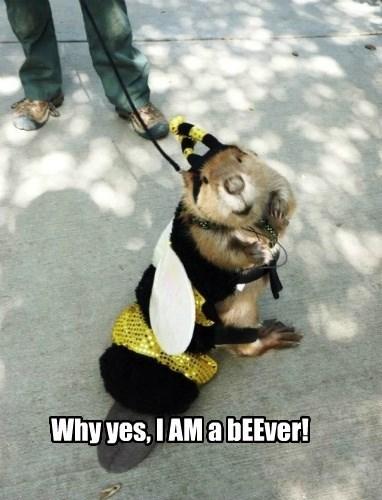beaver costume halloween - 8361837312