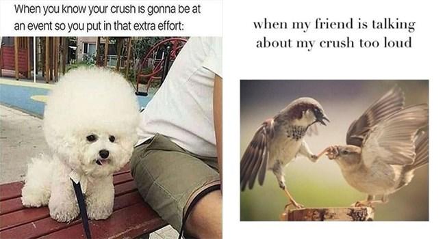 cute dog meets his crush